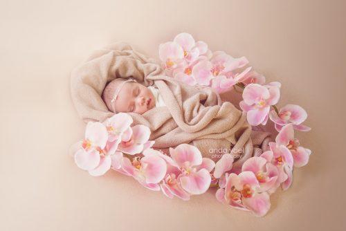 ניובורן בעיטוף ורוד בין פרחים ורודים - צילומי ניובורן בסטודיו אנדה יואל