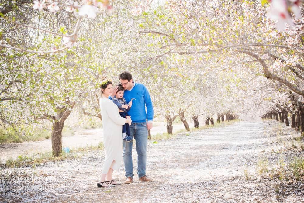 צילומי הריון בטבע במטע שקדיות אבא נותן נשיקה לבן שלו - אנדה יואל