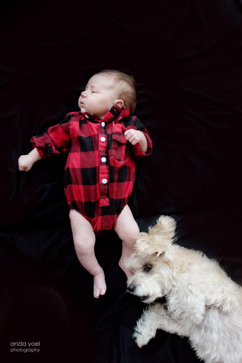 צילומי ניובורן לייף סטייל עם חיות מחמד תינוקת וכלב - אנדה יואל