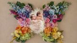 צילומי ניובורן תאומים בתוך פרפר פרחוני בעריכת פוטושופ מורכבת, אנדה יואל
